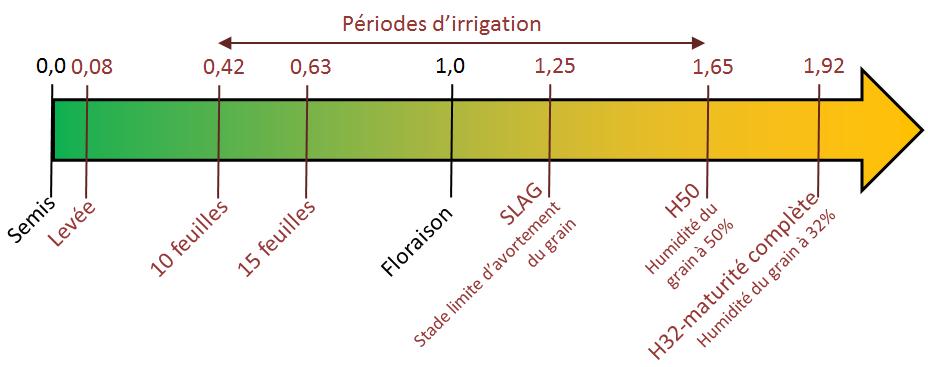 Echelles de végétation pour un maïs demi-Tardif. Les valeurs de stade sont issues d'un référentiel d'Arvalis-Institut du Végétal